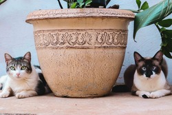 Two cats looking at the camera. There's a plant between them.