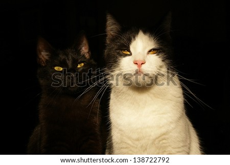Two cats looking very strict
