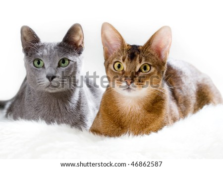 Two cats lying on the sofa