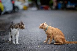 Two cats, one orange and the other gray and black, were staring at each other in the parking lot.