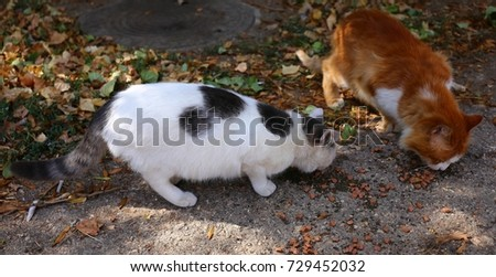 two cats outside #729452032