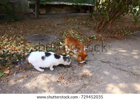 two cats outside #729452035