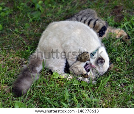 Two cats play fighting in the grass, the tabby appears to be yelling for help.