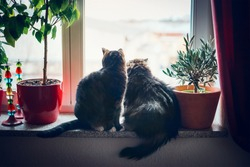 Two cats sits on window sill and looking outside in home furnishings