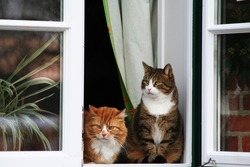 two cats sitting by the window and watches people