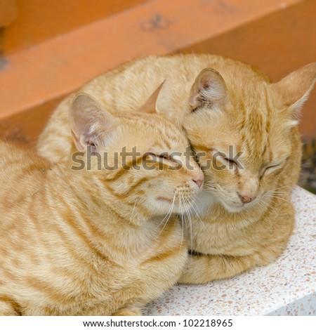 Two cats sleep