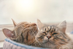 Two cats sleep in basket on window background. Pets relaxing. Bed for domestic animals. Furry and striped pussycats.