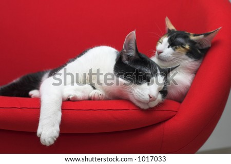 Two cats sleeping on a red chair