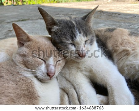 Two cats. The mother cat sleeps with a grown-up kitten touching her face together. Represents a lovely relationship Care and love Gentle affectionate family relationships.