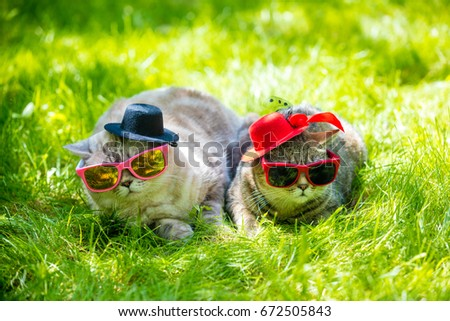 Two cats wearing sunglasses and hat lying in a grass in sunny day. Couple. Girl and boy, woman and men concept. Conceptual idea