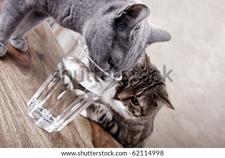 Two cats with glass of water studio shot
