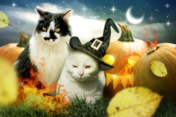 Two cats with halloween pumpkins decorated with fire and autumn leaves