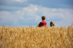 Two Caucasian children playing in wheat field on a cloudy day