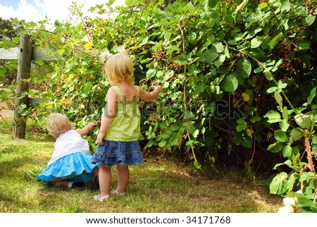 Two caucasian toddlers picking blackberries on farm