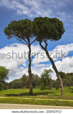 Two charming trees on a glade in suburban park of Madrid