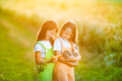 Two cheerful little girls in colored overalls hold a rabbit in their arms and feed it carrots. Caring for animals on the farm.