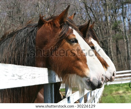 Horses Photo Clipart Image - Photo of horses in a pasture wearing