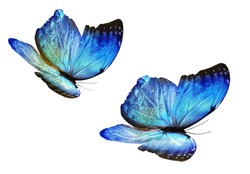 Two color butterflies, isolated on white background