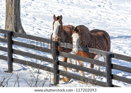 Two colorful horses in the snow near West Charlton, New York.