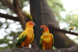 Two colorful parrots talking on tree, fancy poultry, wildlife birds