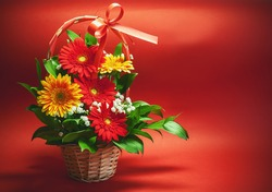Two colors of Gerber flowers, red and yellow, in sweet basket on red background.