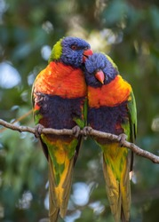 Two colourful parrots perched on a branch