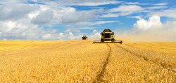 Two Combine Harvesters Cutting Wheat, Summer Landscape of endless Fields under blue sky with clouds