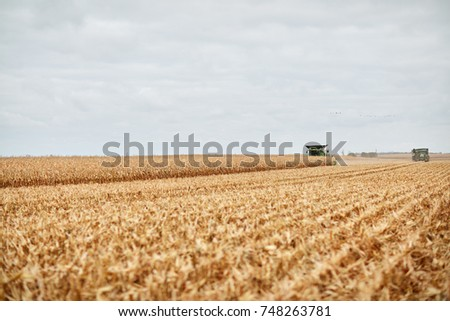Two combine harvesters harvesting maize in a vast farm field under a grey cloudy sky viewed in the distance over stubble