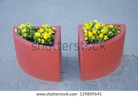 two concrete red flower pots on urban city pavement tiles and yellow violet pansy flowers grow.