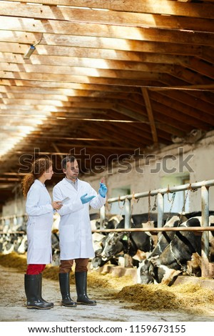 Two contemporary farmers in whitecoats discussing new vaccine and cow virus during meeting in cattlefarm