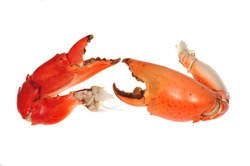Two Cooked Crab Pincers On White background