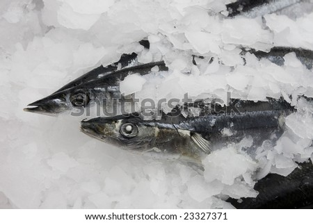 Two cooled fishes on ice