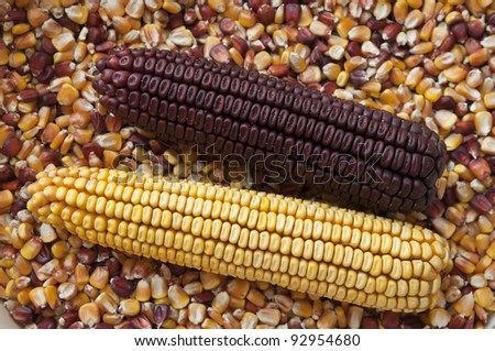 Two corns ot the cobs over  seeds