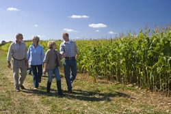 Two couples walking by cornfield