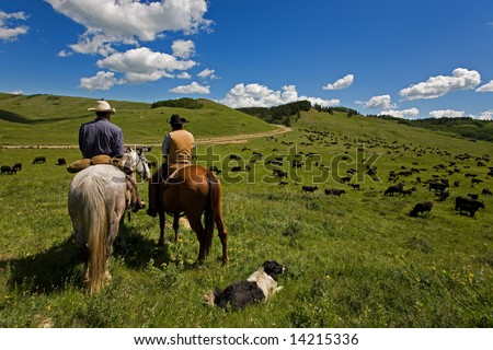 Two cowboys and there dog working with a large herd of cattle