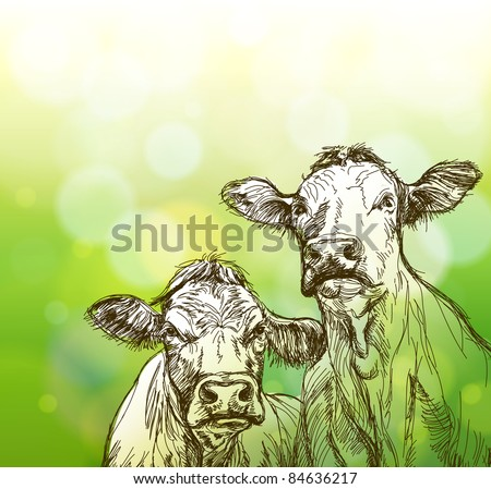 two cows sketch & green bokeh background. Bitmap copy my vector ID 77385517