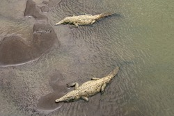 Two Crocodiles lazing on the banks of the Tarcoles River under the Crocodile Bridge on the Pacífica Fernández Oreamuno Highway in Costa Rica