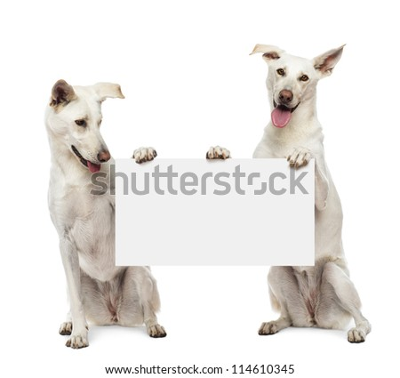 Two Crossbreed dogs sitting and holding white sign against white background Сток-фото ©