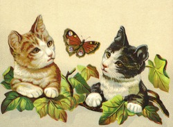 Two curious kittens chasing a butterfly - a vintage (c.1890) illustration.