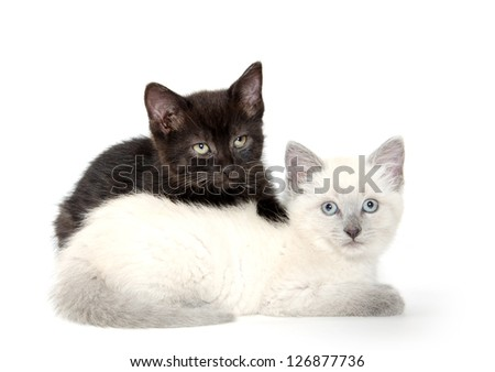 Two cute baby kittens resting on white background