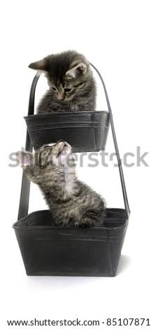 Two cute baby tabby cats sitting inside of a metal flower pot on white background