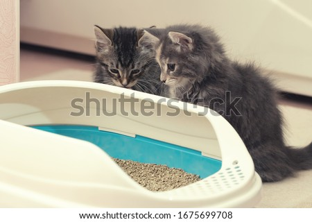 Two cute kittens are sitting near their litter box. Training kittens to the toilet Сток-фото ©