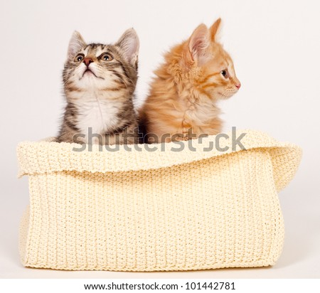 Two cute kittens in the basket - stock photo
