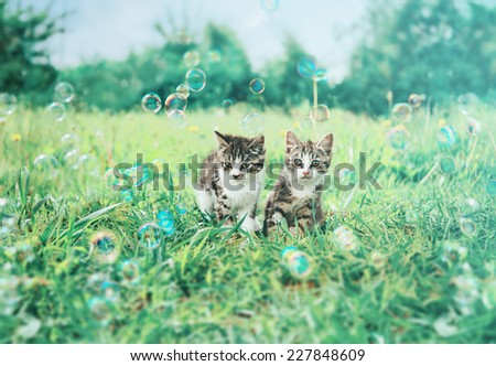 Two cute kittens sitting among soap bubbles on summer grass. Image with vintage instagram filter