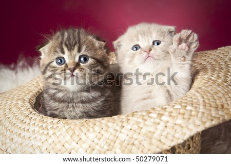Two cute kittens sitting in hat - stock photo