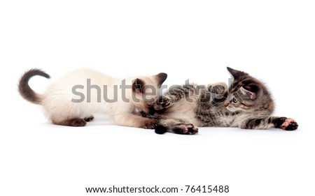 Two cute kittens wrestling and fighting on white background
