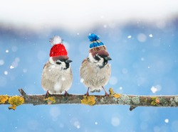 two cute little birds in funny knit hats in the winter sitting on a branch in the garden in the snow