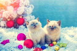 Two cute little kittens sitting in a blanket with Christmas decoration near fir tree
