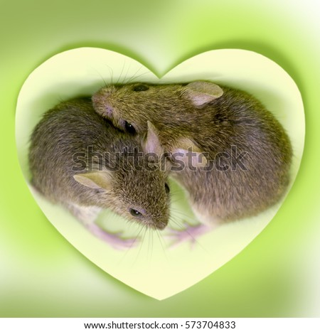Two cute little mouse embraced in the center of the heart on a pink background #573704833