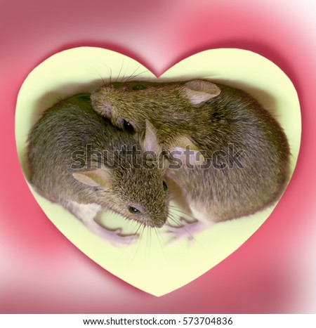 Two cute little mouse embraced in the center of the heart on a pink background #573704836